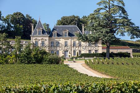vineyard of chateau fonplegade