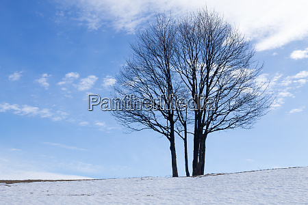 solitaire tree in winter season nature