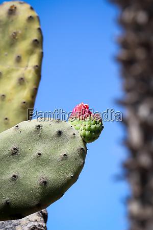 details of a cactus blossom
