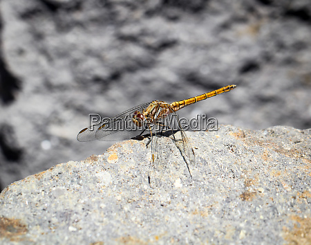 details of a dragonfly
