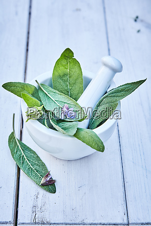 fresh green salvia leaves in a