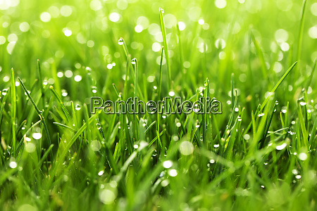 green grass with water drops in