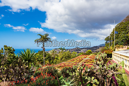 view to a garden in funchal