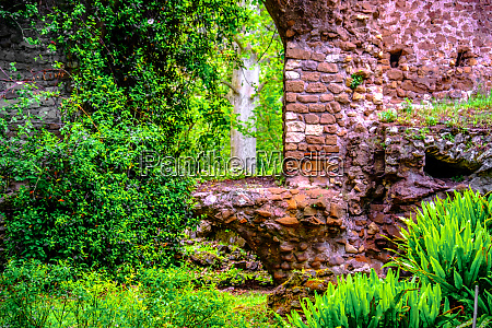 window brick ruins ivy plant background