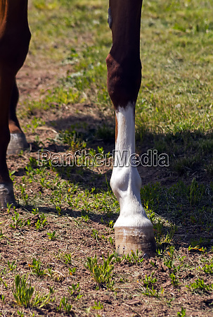 horse feet close up