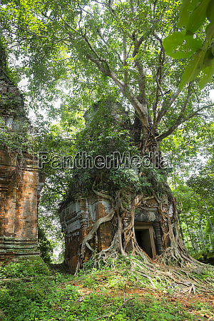 tree roots growing on prasat pram
