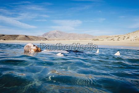 carefree man floating in blue ocean
