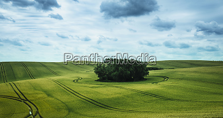 scenic view green farmland and stand