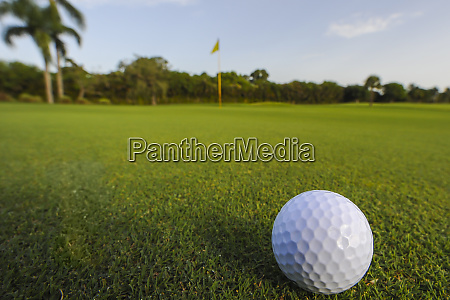 golf ball rolling on putting green