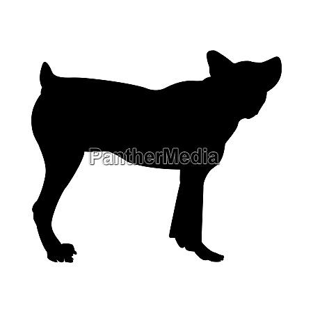 sheep dog silhouette
