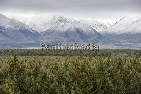 forest, by, ben, ohau, mountain, range - 26909521