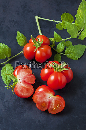 cherry tomatoes voyage on dark ground