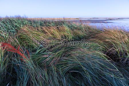 spain villafafila grasses at lakeside