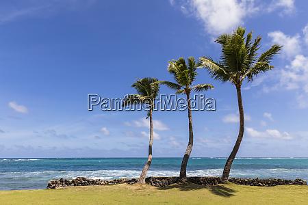 usa hawaii oahu hauula palms at