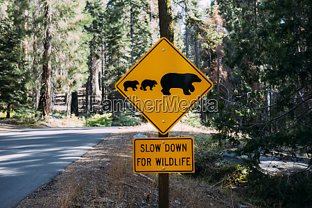 usa california sequoia natioal park animal