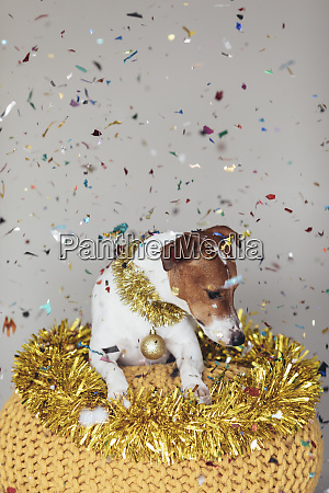 dog wearing golden garland and christmas