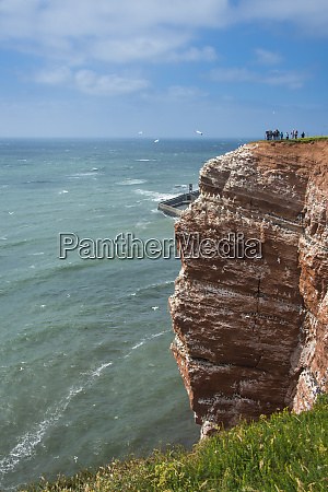 germany helgoland island northern gannet colony