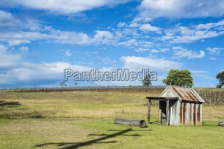 australia new south wales vine region