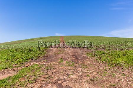 hillside farming crops summer path landscape