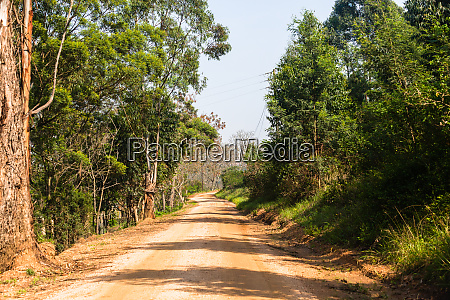 dirt road trees explore countryside