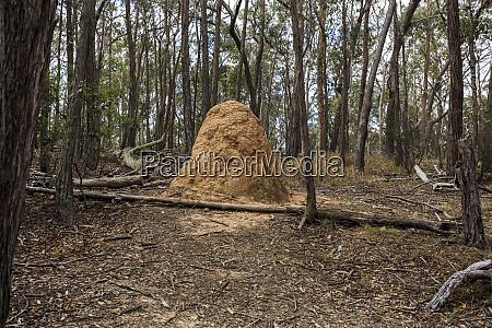 new england national park termite