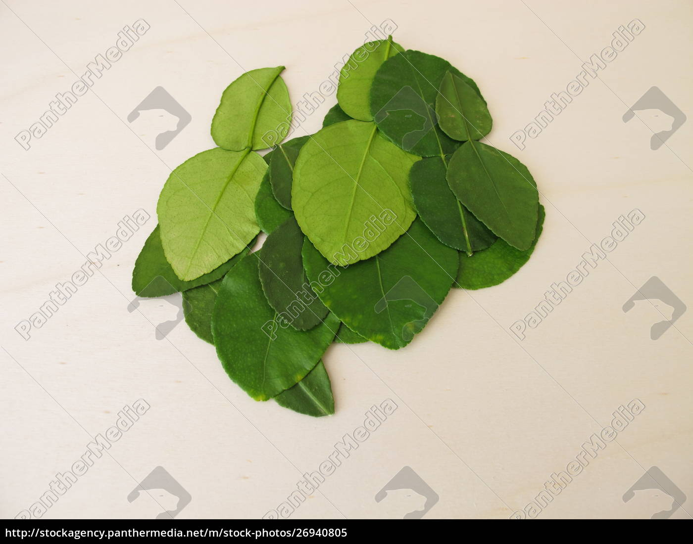 Fresh Kaffir Lime Leaves Stock Photo 26940805 Panthermedia Stock Agency,How To Make Jalapeno Poppers With Cream Cheese