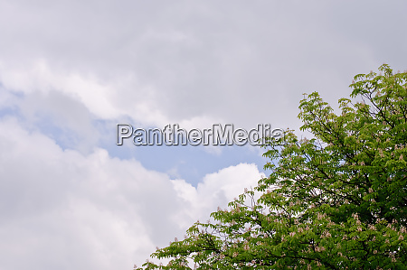 trees with green leaves and a