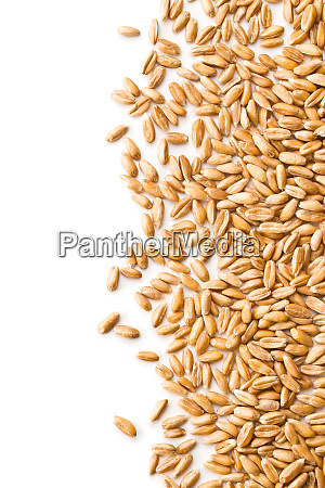 healthy spelt grains