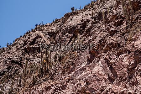 beautifil natur in the elqui valley