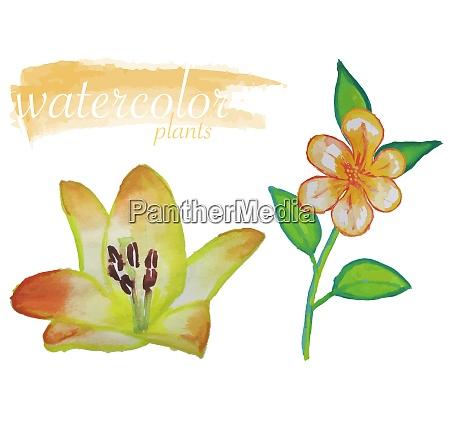 yellow watercolor flower set