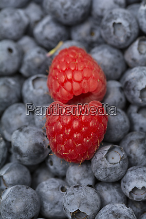 blackberry and raspberries