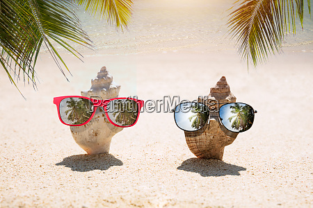 conch dig in sand with sunglasses