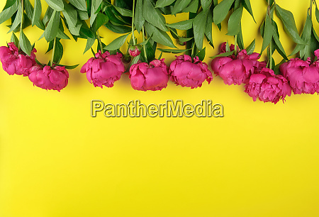 bouquet of red peonies with green