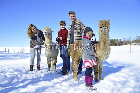 family with alpacas on a field