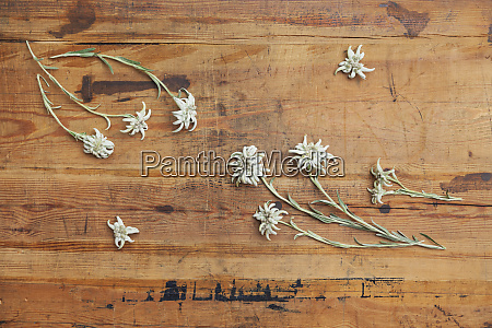 edelweiss on wood