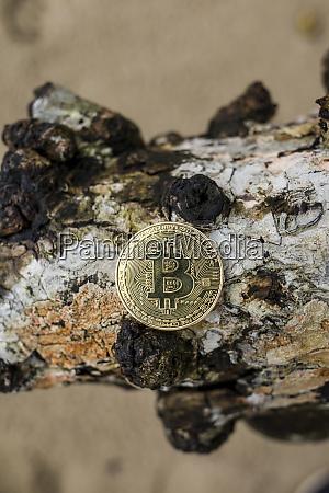 bitcoin on a piece of bark