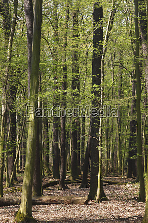 germany forest in april