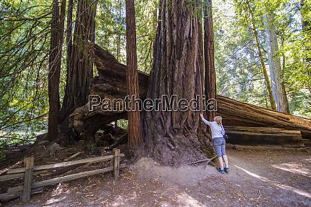 usa california big basin redwoods state