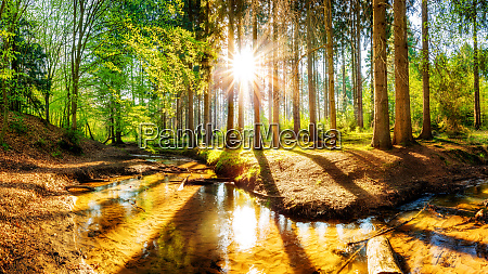 beautiful forest with bright sun shining