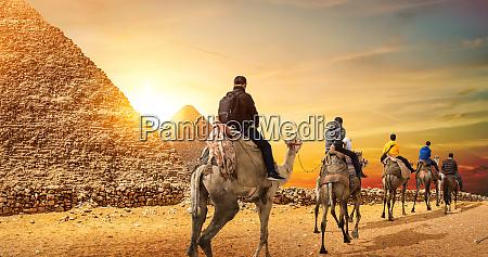 camel caravan and pyramids