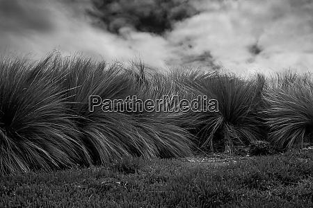 black and white photography of coastal