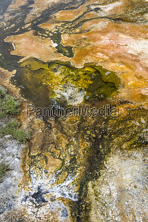 mammoth hot spring bacteria pond