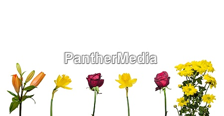 colorful flowers and white background