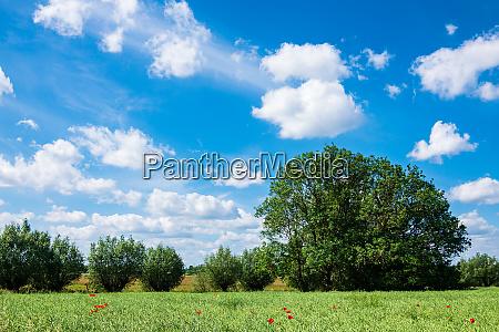 green field with blue sky near