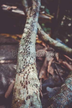 termites colony taman negara national park