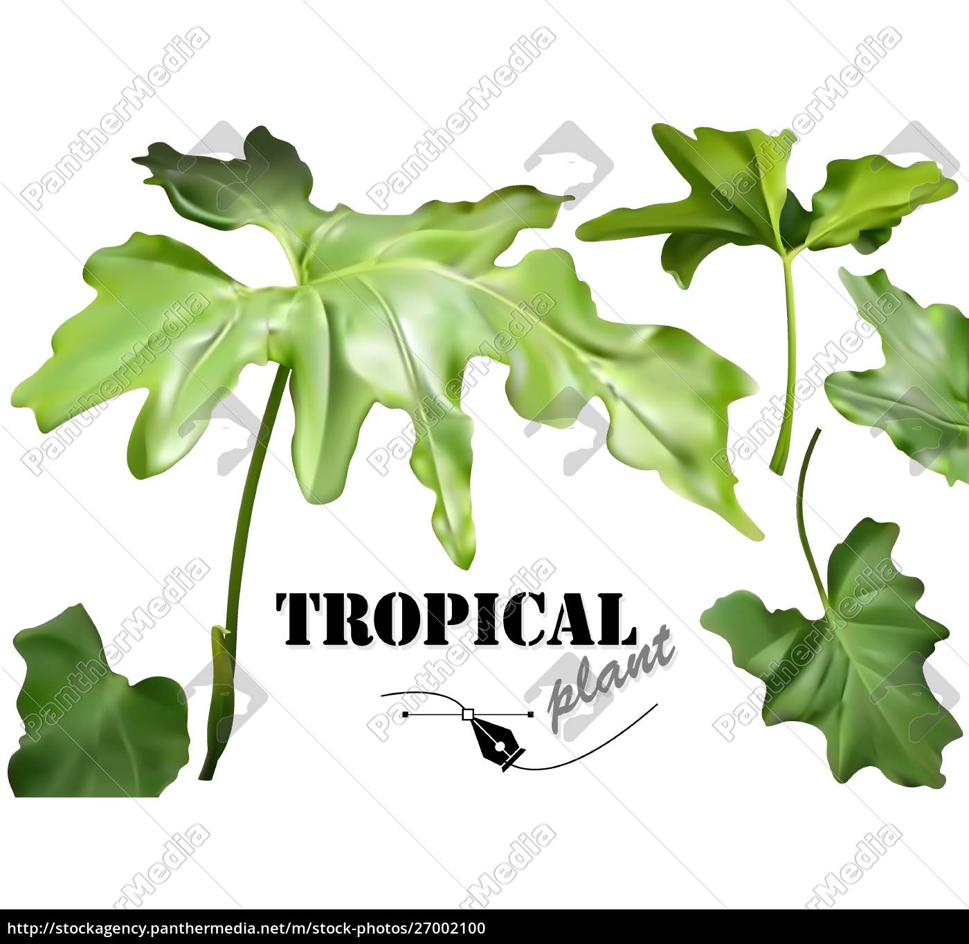 green, tropical, leaves, set - 27002100