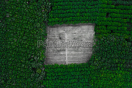 top aerial view in tropical forest