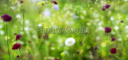 flower meadow and pollen