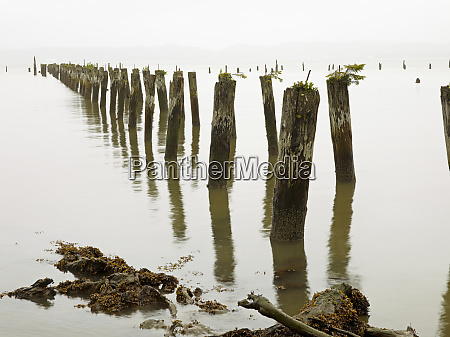 old pilings standing upright in the
