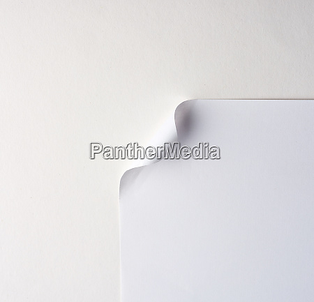 blank white sheet of paper with